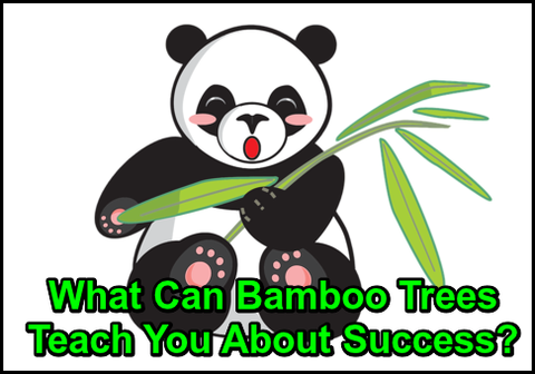 What Can Bamboo Trees Teach You About Success?