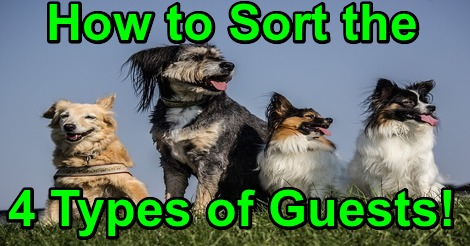 How to Sort the 4 Types of Guests!